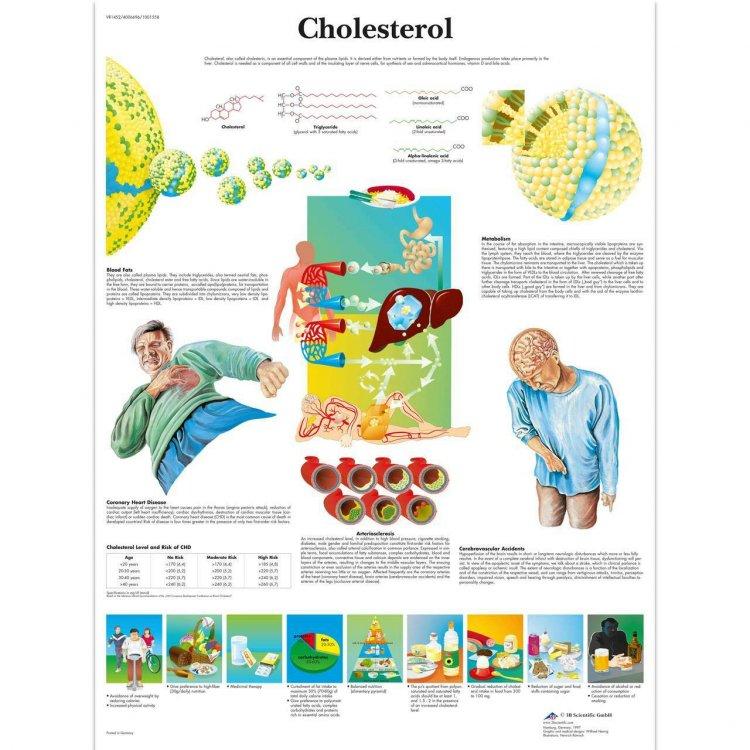 Αφίσα χοληστερόλης