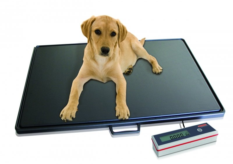 Soehnle Veterinary Floor Scale