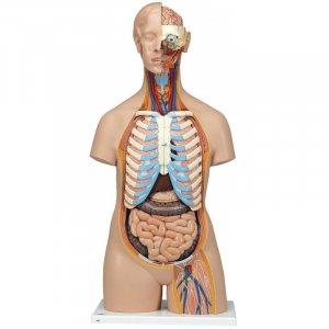 Πρόπλασμα ζωτικών οργάνων